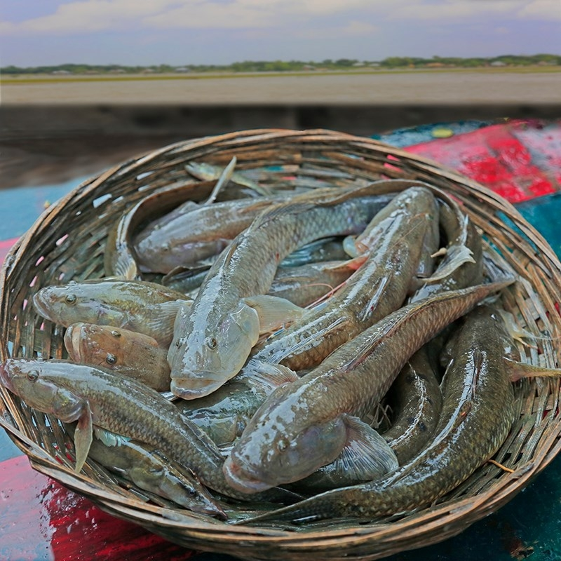 Bele/Baila Medium Size Deshi Fish