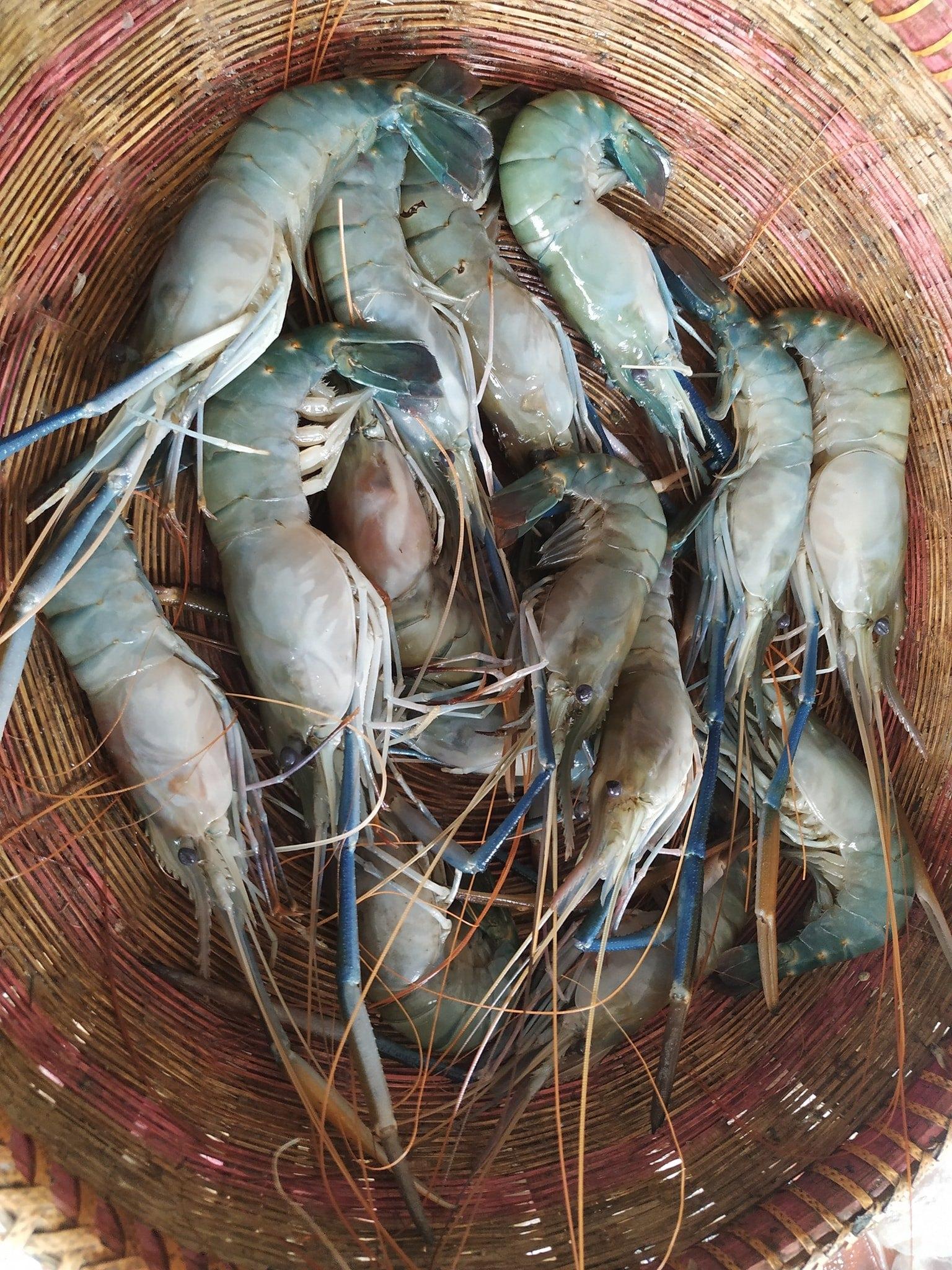 Chingri Golda Medium Size River Fish (25-35pcs/1kg)
